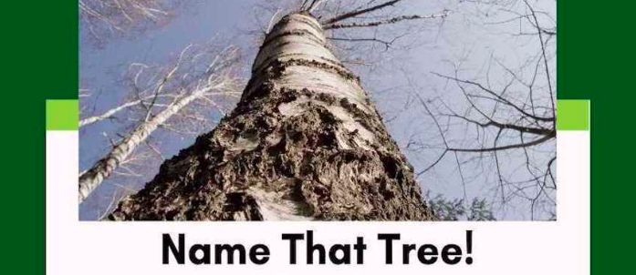 Name That Tree!