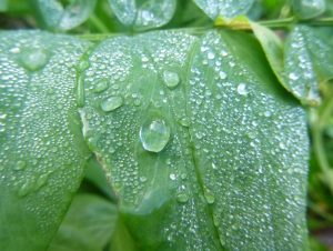Rain on leaves, student photography