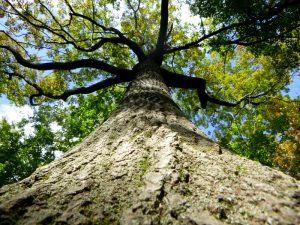 a tree from below, new perspectives in photography